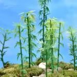 Fairy Garden Plants Mini Bamboo Plant Figurine Fairy Garden Accessories Micro Landscape Bonsai Decor DIY Fairy Garden Supplies